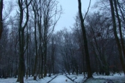 renata_teresa_korek_1_20130313_1698699109